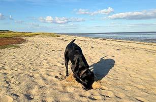 Strand am Ellenbogen – für Hunde ein Traum